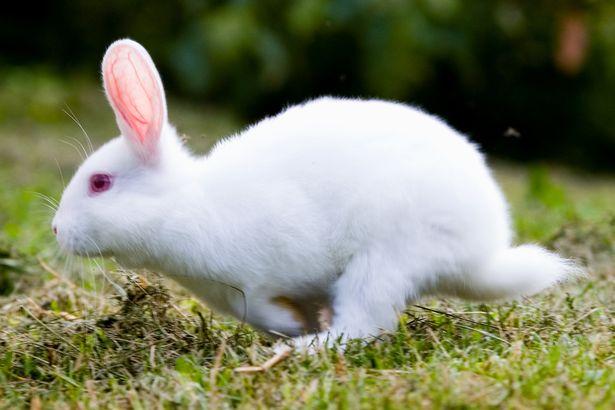 Bunny-Rabbit-bunny-rabbit.jpg